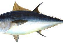 All about fish / Blog http://ilovecoastalliving.blog.pl/