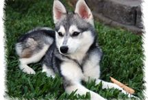 Interesting Mixed Breed Dogs / by Tamara Thomson