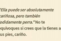 Indirectas (frases)
