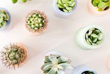 Cactus y suculentas ♡