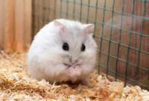 Hamster ❤❤