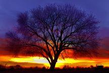 tree hugger  / by Marilyn Pokras