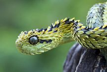 Reptiles / for reptile lovers and owners.