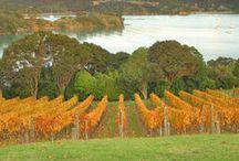 waiheke vineyards