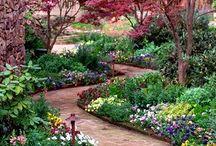 Gardens plants roses / by Kerren Morris