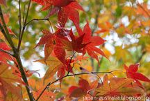 Autumn Leaves / Autumn is one of the best times to be in Japan with the stunning Autumn leaves. / by Japan Australia
