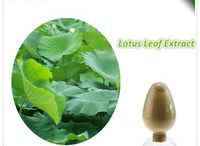 weight loss product lotus leaf extract powder