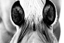 foto paarden ideeën