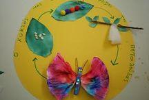 Κύκλος ζωής πεταλούδασ