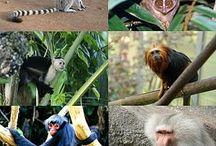 Mammals (200 My)