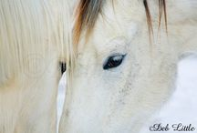 Image and Ember / Two wild horses from the Pryor Mountains of Montana that my husband and I adopted and are now living with us on our farm in Ohio