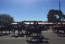 Laveen Community Parade and BBQ / Laveen Arizona annual parade and BBQ. Beautiful February dayf or both events.