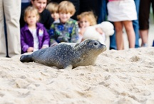 Animal Rescue / Mystic Aquarium's Animal Rescue Team covers Connecticut, Rhode Island and Fisher's Island, N.Y. If you come across a marine mammal or sea turtle, call our 24-hour hotline at 860.572.5955 ext.107.