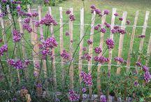 tuin planten wenslijstje