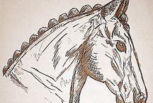 Horses - Drawings & Illustrations