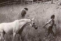 Jackie & Horses