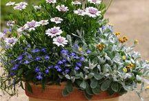Garden Ideas / by Judy Lawson
