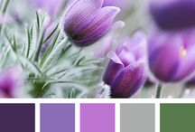 Colour palettes for inspiration