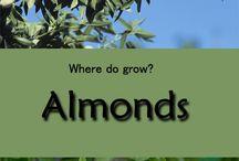 Almond tree growing