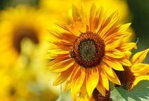 Flowers, etc... / by Debbie McKenzie Stultz