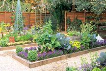 Gardens / by Leah Profancik