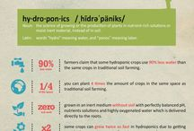 Facts / The true story behind hydroonics