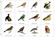 madarak fák