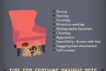 Pet Behavior & Training