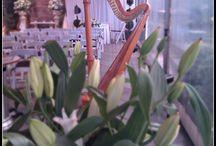 Wedding Harp Style