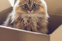 Kitty's *.*