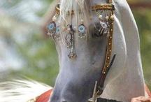 Horses / by Kat S
