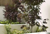 Benbecula Garden ideas / Things we like -  for Matt