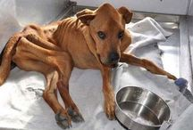 Miracle For Dog / This dog weighed only 21 kg when they found it dying out of starvation. It was almost giving a rebirth to this dying dog.