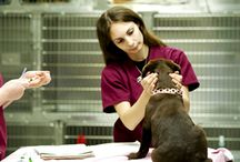 Dog Health Tips / Tips and advice for keeping your canine companion happy and healthy.