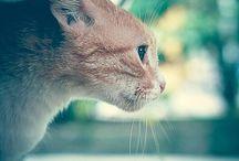 my cat / cat