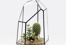 terrariums and succulents