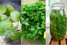 Natural and herbal solutions