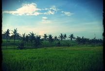 Zobacz Bali / Amazing Bali
