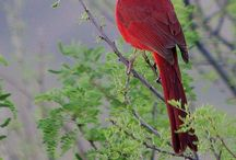 Cardinals, Finches, Blue Jays and other beautiful birds / by Mary Kay Killian