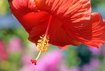 Summer Flowers / Beautiful flowers, pictures from my garden and any others that caught my eye. I love summer.
