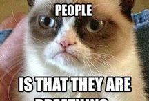 You must love Grumpy cat