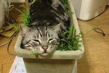 Funny garden