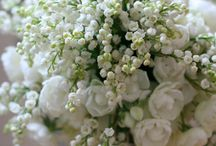 Whites and Ivories / Romantic, elegant, timeless - the natural beauty of this palette lets your love shine through.