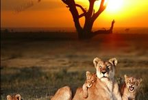 por do sol - sunset