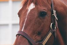 SECRETARIAT / The one and only Secretariat!