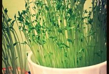 I love green ♡ ♡ ♡