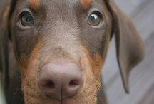 puppy love  / by Asia Ortega