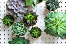 Succulents and Cacti / by Shawn Marie