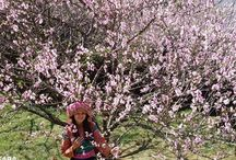 Trekking East Asia / Trekking tours in Eat Asia