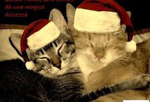 La Favola del Natale / A Natale non si è tutti più buoni, però si è più sentimentali. Per tutti quelli che sognano un Natale romantico con eDarling